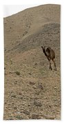Camels At The Israel Desert -2 Bath Towel