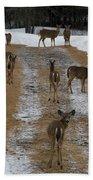 Can Deer Read Bath Towel
