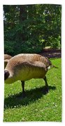 Canada Geese Bath Towel