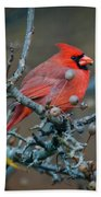 Cardinal In The Berries Bath Towel
