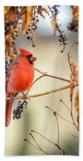 Cardinal In The Pokeberries Bath Towel