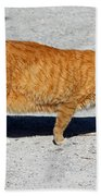 Cat Walk Bath Towel