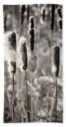 Cattails In Winter Hand Towel by Elena Elisseeva