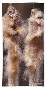 Cattails Bath Towel