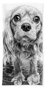 Cavalier King Charles Spaniel Puppy Dog Portrait Bath Towel