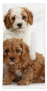 Cavapoo Puppies Bath Towel
