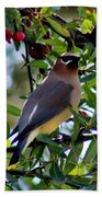 Cedar Waxwing In Tree 030515a Bath Towel