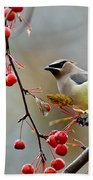 Cedar Waxwing Pictures 50 Bath Towel
