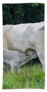Charolais Cattle Nursing Young Bath Towel
