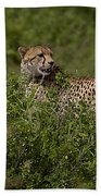 Cheetah   #0089 Bath Towel