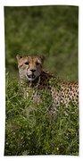 Cheetah   #0090 Bath Towel
