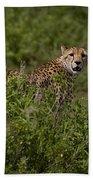 Cheetah   #0093 Bath Towel