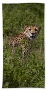 Cheetah   #0095 Hand Towel
