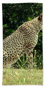 Cheetah-79 Bath Towel