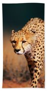 Cheetah Approaching From The Front Hand Towel by Johan Swanepoel