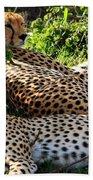 Cheetah - Masai Mara - Kenya Hand Towel