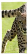 cheetah Running Portrait Bath Towel
