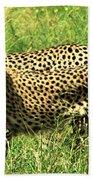 Cheetahs Running Bath Towel