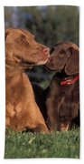 Chesapeake Bay Retrievers Bath Towel