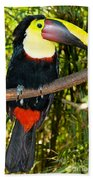 Chestnut Mandibled Toucan Bath Towel