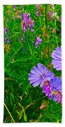 Chicory And Purple Vetch Along Rivier Du Nord Trail In Laurentians-quebec Bath Towel