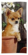 Chihuahua Dog In Flowerpot Bath Towel