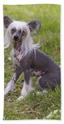 Chinese Crested Dog Bath Towel
