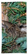 Chipping Sparrow On Nest Bath Towel