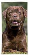 Chocolate Labrador Dog Bath Towel