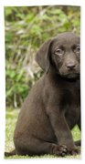 Chocolate Labrador Puppy Bath Towel