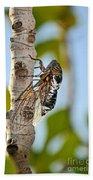 Cicada On Fig Tree Bath Towel