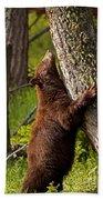 Cinnamon Boar Black Bear Bath Towel