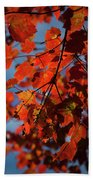 Close Up Of Bright Red Leaves With Blue Bath Towel