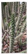 Close Up Of Long Cactus With Long Thorns  Bath Towel