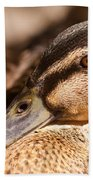 Close Up Shot Of Female Mallard Duck Bath Towel