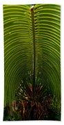 Closeup Of A Palm Tree Leaf Bath Towel