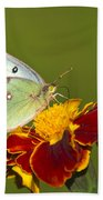 Clouded Sulphur Butterfly Hand Towel