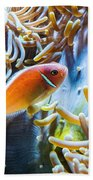 Clown Fish - Anemonefish Swimming Along A Large Anemone Amphiprion Bath Towel