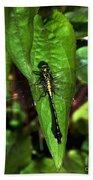 Club Tailed Dragonfly Bath Towel