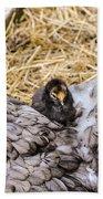 Cochin Hen And Chick Bath Towel
