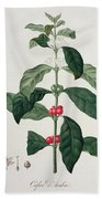 Coffea Arabica From Phytographie Bath Towel