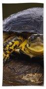 Colombian Wood Turtle Amazon Ecuador Bath Towel