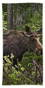 Colorado Moose Bath Towel