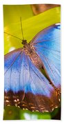 Common Blue Morpho Bath Towel