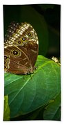 Common Blue Morpho Moth Bath Towel