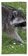 Common Raccoon Bath Towel