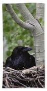 Common Raven Incubating Eggs In Nest Bath Towel