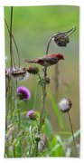 Common Redpoll In A Field Of Thistle Bath Towel