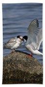 Common Tern Pictures 48 Bath Towel