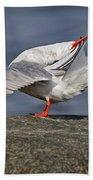 Common Tern Pictures 51 Bath Towel